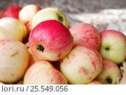 Яблоки. Стоковое фото, фотограф Аня Шумкова / Фотобанк Лори