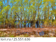 Sunny spring landscape - willow thicket flooded with spring flood waters, фото № 25551636, снято 5 мая 2016 г. (c) Зезелина Марина / Фотобанк Лори