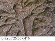 Купить «Фон корни деревьев на земле», фото № 25557416, снято 8 августа 2016 г. (c) Евгений Рашевский / Фотобанк Лори
