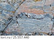 Купить «Узор на камне», фото № 25557440, снято 14 августа 2016 г. (c) Евгений Рашевский / Фотобанк Лори