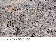 Купить «Острые камни горной породы», фото № 25557444, снято 14 августа 2016 г. (c) Евгений Рашевский / Фотобанк Лори
