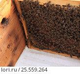 Пчелиная рамка второй ярус вид сверху. Стоковое фото, фотограф Денис Кошель / Фотобанк Лори
