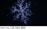 Snowflake on a black background melts. Стоковое видео, видеограф Константин Скуридин / Фотобанк Лори