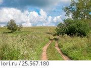 Купить «Проселочная дорога - колея через поле летом», фото № 25567180, снято 3 августа 2016 г. (c) Pukhov K / Фотобанк Лори
