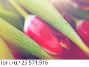 Купить «close up of tulip flowers», фото № 25571916, снято 27 января 2016 г. (c) Syda Productions / Фотобанк Лори
