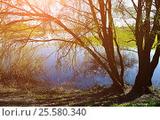 Купить «Sunny colorful spring landscape - willow under sunshine on the bank of the river», фото № 25580340, снято 5 мая 2016 г. (c) Зезелина Марина / Фотобанк Лори