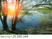 Купить «Весенний пейзаж - ива на берегу реки в солнечную погоду», фото № 25580344, снято 5 мая 2016 г. (c) Зезелина Марина / Фотобанк Лори