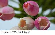 Купить «Close-up of a bouquet of tulips on a light background», видеоролик № 25591648, снято 21 февраля 2017 г. (c) Сергей Кальсин / Фотобанк Лори
