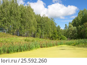 Купить «Летний пейзаж с березовой рощей и прудом», эксклюзивное фото № 25592260, снято 13 августа 2016 г. (c) Елена Коромыслова / Фотобанк Лори