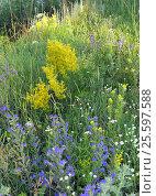 Купить «Blossom wild flowers», фото № 25597588, снято 3 июля 2014 г. (c) Сергей Девяткин / Фотобанк Лори