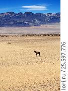 Horse in Succulent Karoo Desert, Namibia (2016 год). Стоковое фото, фотограф Знаменский Олег / Фотобанк Лори