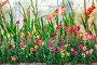 Summer flowers outdoors in the garden, фото № 25602756, снято 12 августа 2016 г. (c) Ярочкин Сергей / Фотобанк Лори