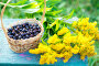 Wicker basket with gooseberry and yellow flowers, фото № 25602784, снято 12 августа 2016 г. (c) Ярочкин Сергей / Фотобанк Лори