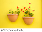 Купить «Flowers in two pots», фото № 25603636, снято 15 июня 2016 г. (c) Ярочкин Сергей / Фотобанк Лори