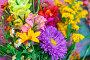 Bouquet of garden flowers, фото № 25605440, снято 13 августа 2016 г. (c) Ярочкин Сергей / Фотобанк Лори