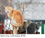 Three cats sit in the village on fence in the spring during snowfall. Стоковое фото, фотограф Бачкова Наталья / Фотобанк Лори