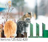 Cats in the village in the spring sitting on wooden fence. Стоковое фото, фотограф Бачкова Наталья / Фотобанк Лори