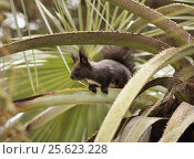 Купить «Белка сидит на пальме», эксклюзивное фото № 25623228, снято 30 марта 2011 г. (c) Dmitry29 / Фотобанк Лори