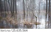 Купить «The spring wood flooded with water and which has frozen under ice», видеоролик № 25635564, снято 4 февраля 2010 г. (c) Куликов Константин / Фотобанк Лори