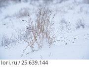 Сухая трава, застывшая в ледяной глазури. Стоковое фото, фотограф София Тюленева / Фотобанк Лори