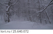 Купить «Snowy forest on North slope Aibga Ridge Western Caucasus at all-season resort Gorky Gorod stock footage video», видеоролик № 25640072, снято 31 января 2017 г. (c) Юлия Машкова / Фотобанк Лори