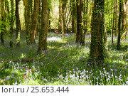 Весна в лесу, фото № 25653444, снято 15 мая 2016 г. (c) Татьяна Кахилл / Фотобанк Лори