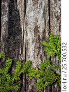 Веточки ели на старом деревянном фоне, фото № 25700532, снято 4 июля 2014 г. (c) Наталья Осипова / Фотобанк Лори