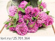 Купить «Красный луговой клевер на дощатом фоне», фото № 25701364, снято 11 июля 2014 г. (c) Наталья Осипова / Фотобанк Лори