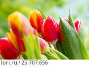 Купить «close up of tulip flowers», фото № 25707656, снято 28 января 2016 г. (c) Syda Productions / Фотобанк Лори