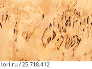 Купить «Wooden pattern of Karelian birch», фото № 25718412, снято 8 марта 2017 г. (c) EugeneSergeev / Фотобанк Лори