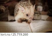 Купить «Hedgehog reading a book», фото № 25719260, снято 7 марта 2017 г. (c) Алексей Кузнецов / Фотобанк Лори