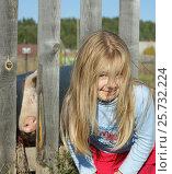 Девочка и смешная свинья, выглядывающая из-за забора. Стоковое фото, фотограф Юлия Мальцева / Фотобанк Лори