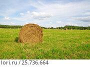 Купить «Рулон скошенной соломы в поле», эксклюзивное фото № 25736664, снято 10 августа 2016 г. (c) Елена Коромыслова / Фотобанк Лори
