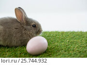 Купить «Easter eggs and Easter bunny in grass», фото № 25744932, снято 10 января 2017 г. (c) Wavebreak Media / Фотобанк Лори