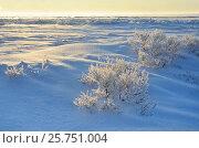 Купить «Берег озера Байкал в районе мыса Большой Кадильный зимним утром на рассвете», фото № 25751004, снято 22 июля 2019 г. (c) Овчинникова Ирина / Фотобанк Лори