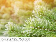 Купить «Сосновые ветки в инее», фото № 25753060, снято 9 октября 2016 г. (c) Икан Леонид / Фотобанк Лори