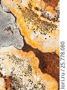 Купить «Lichens on rock, Torridon, Scotland, UK, November.», фото № 25778080, снято 17 августа 2018 г. (c) Nature Picture Library / Фотобанк Лори