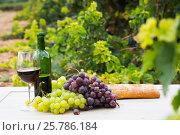 Купить «vine and grape bunches», фото № 25786184, снято 21 августа 2018 г. (c) Яков Филимонов / Фотобанк Лори