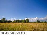 Beautiful summer landscape. Sky and grass. Стоковое фото, фотограф Мария Сидельникова / Фотобанк Лори
