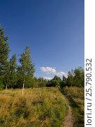 Pathway through summer meadow and a birch forest under the blue sunny sky. Стоковое фото, фотограф Мария Сидельникова / Фотобанк Лори