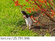 Мышьь стоит на задних лапах и тянется к кусту. Стоковое фото, фотограф Elena Kucherenko / Фотобанк Лори