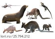 Купить «australian animals isolated», фото № 25794212, снято 18 июля 2019 г. (c) Яков Филимонов / Фотобанк Лори
