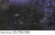 Купить «Beautifully Marine Aquarium with silvery fish stock footage video», видеоролик № 25799780, снято 11 января 2017 г. (c) Юлия Машкова / Фотобанк Лори