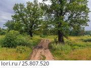 Старая грунтовая дорога под дубами. Стоковое фото, фотограф Kroshanya / Фотобанк Лори
