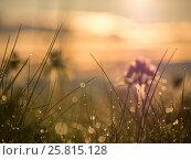 Блики на траве. Рассвет. Роса. Стоковое фото, фотограф LittleAs / Фотобанк Лори