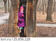 Купить «Old oak with hollow, which can fit man, girl standing in hollow and looking at camera», фото № 25836228, снято 9 марта 2015 г. (c) Losevsky Pavel / Фотобанк Лори