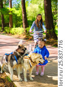 Купить «Little girl in blue jacket stroking sled dogs, her sister rides scooter in summer park, focus on kid», фото № 25837716, снято 9 мая 2014 г. (c) Losevsky Pavel / Фотобанк Лори