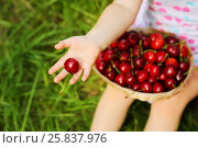Купить «Basket with red wet cherry and hand of little girl with berrie on grass», фото № 25837976, снято 24 июня 2015 г. (c) Losevsky Pavel / Фотобанк Лори