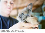 Купить «Teenage boy holds little grey shaggy rabbit in hands, focus on rabbit», фото № 25840032, снято 30 мая 2015 г. (c) Losevsky Pavel / Фотобанк Лори