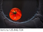 A whole, ripe, red tomato on a stone tray on a gray stone background. View from above. Стоковое фото, фотограф Татьяна Дубчук / Фотобанк Лори